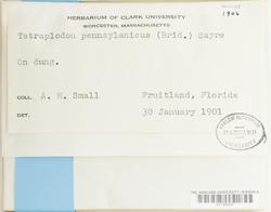 Splachnum pensylvanicum image