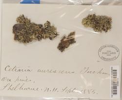 Ahtiana aurescens image