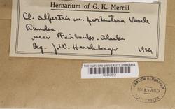 Cladonia portentosa image