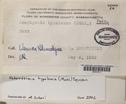 Polyblastidium hypoleucum image