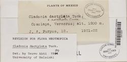 Cladonia dactylota image