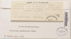 Cladonia apodocarpa image