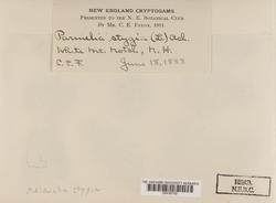 Melanelia stygia image