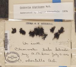 Cetraria nigricans image