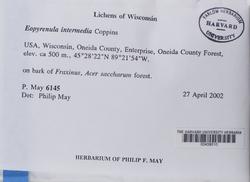 Eopyrenula intermedia image