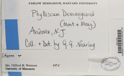 Phylliscum demangeonii image