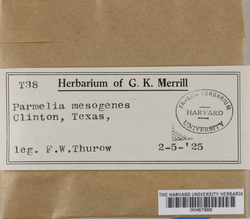 Parmotrema perlatum image