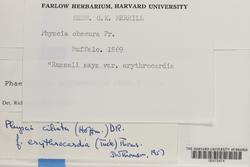 Phaeophyscia erythrocardia image