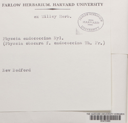 Phaeophyscia endococcina image