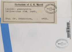Lecidella anomaloides image