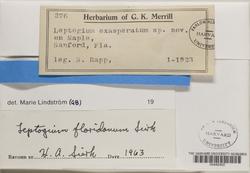Leptogium floridanum image