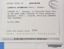 Letharia columbiana image