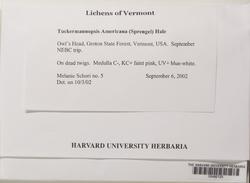 Tuckermanopsis americana image
