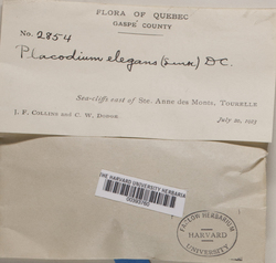Rusavskia elegans image