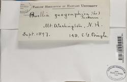 Rhizocarpon geographicum image