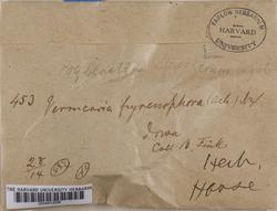 Thelidium pyrenophorum image