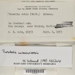 Punctelia missouriensis image