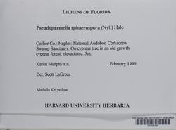 Pseudoparmelia uleana image
