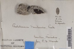 Reimnitzia santensis image