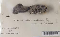Porpidia albocaerulescens image