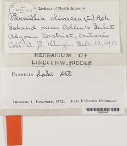 Melanohalea halei image