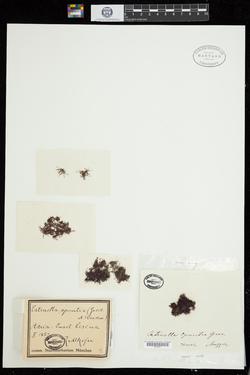 Thumbnail image of sheet