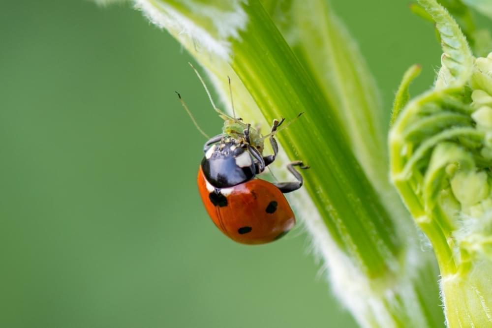 5 Ways to Get Rid of Spider Mites during Flowering ...