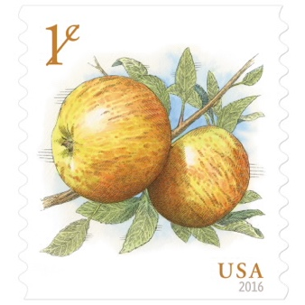 USA one cent stamps featuring two yellow apples with green leaves and a small stick, reading 1¢ in the upper left and USA in the lower right