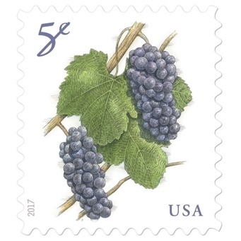 USA five cent stamps, two bundles of purple grapes with green leaves, reading 5¢ in the upper left and USA in the bottom right, both in purple font