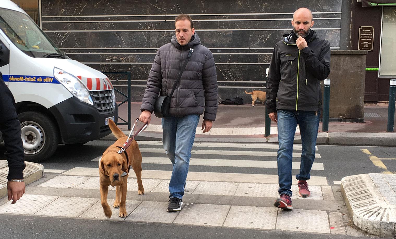 Photo chien guide pour aveugles