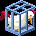 Poussin en cage