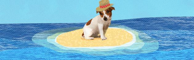 photo chien sur une île