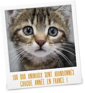 100 000 animaux sont abandonnés chaque année en France !