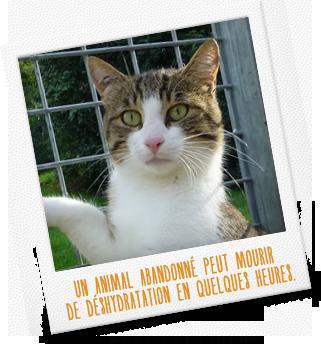 Un animal abandonné peut mourir de déshydratation en quelques heures