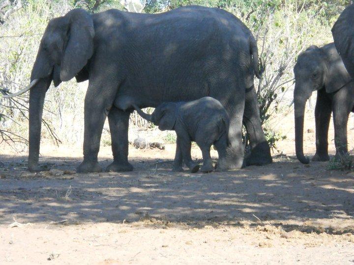 Mama and baby elephant