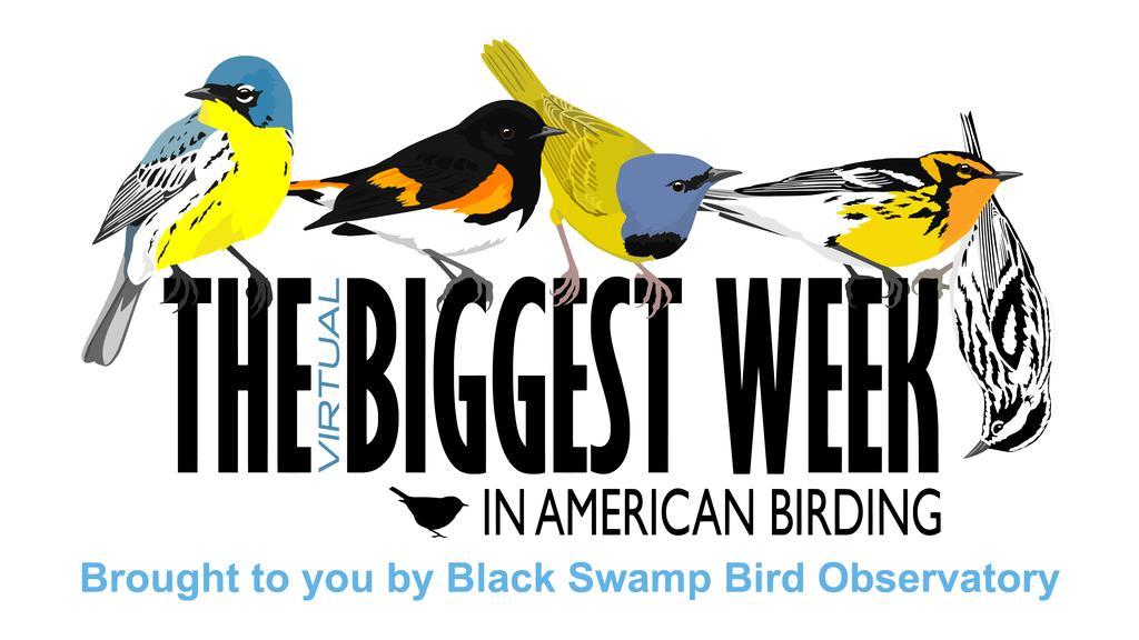 2021 Virtual Biggest Week In American Birding