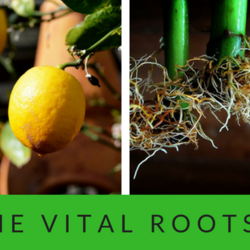 The vital roots fb cover