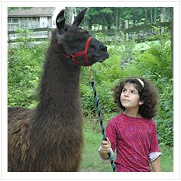 little girl with llama