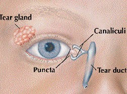 Tear duct and puncta diagram