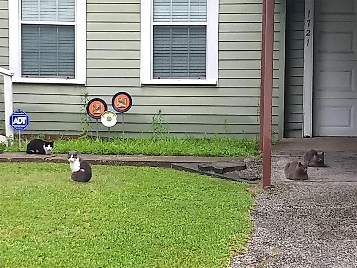 Houston Cat Family