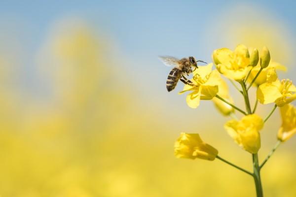 The Buzz Around Honey