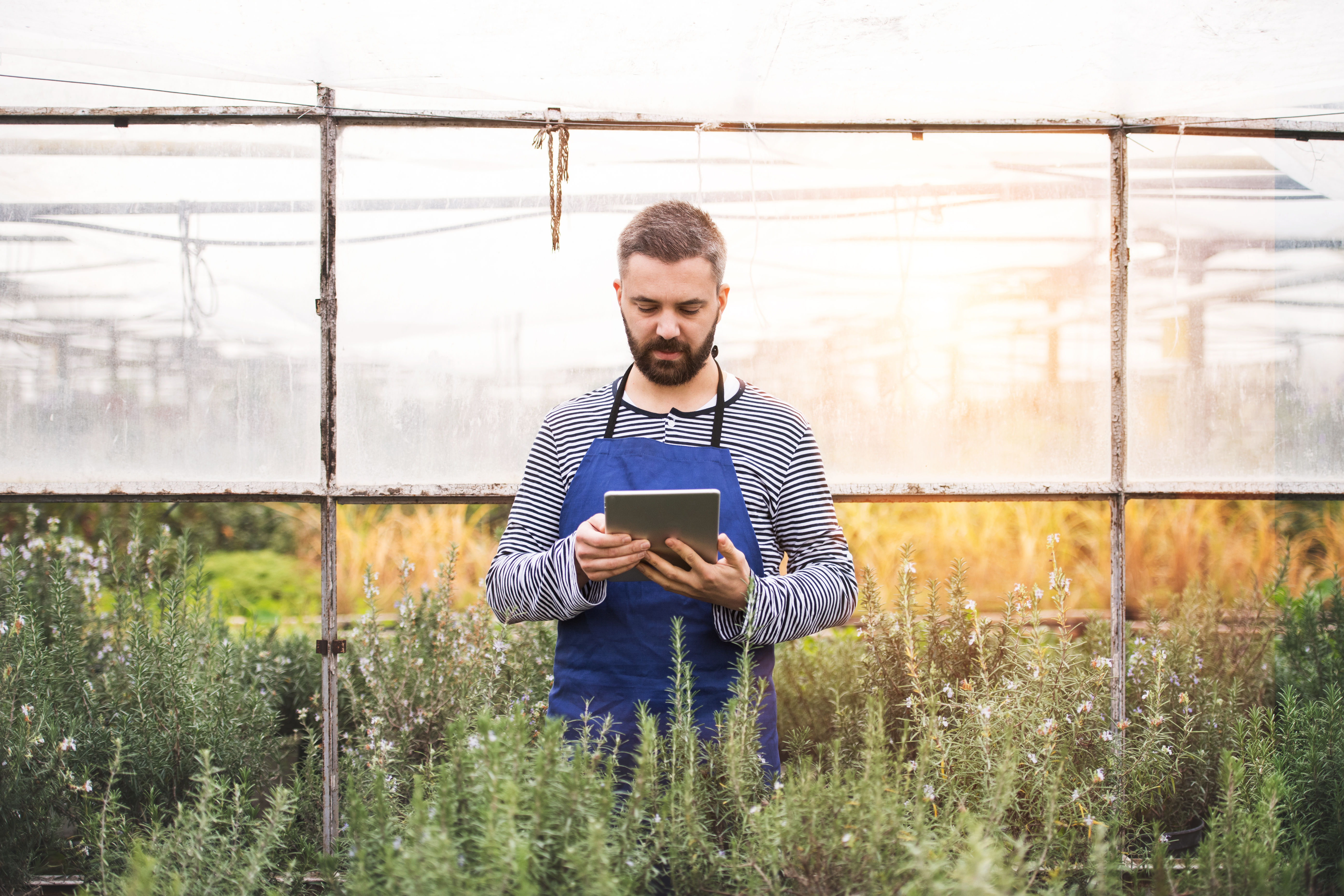 Man in a greenhouse holding an iPad