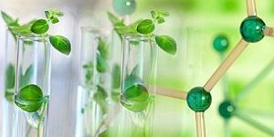 Green Chemistry 2019