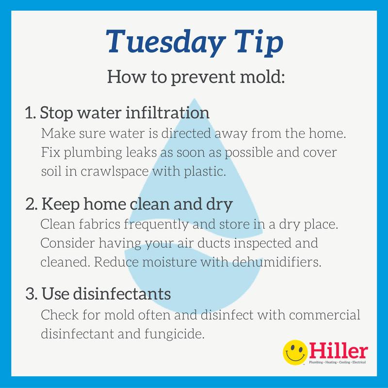 3 mold prevention tips