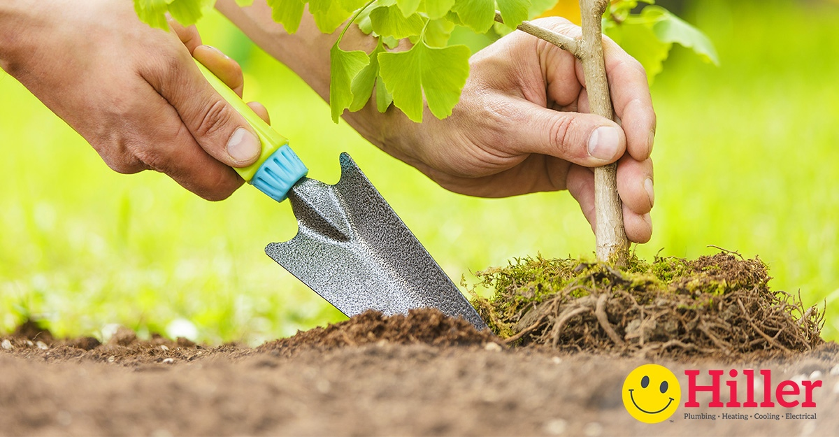 Strategic Tree Planting Strategy - Earth Day Arbor Day