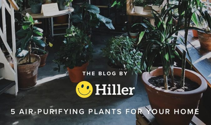 Hiller July Five Air Purifying Plants For Your Home 1