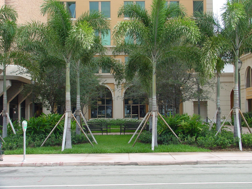 2555 Ponce de Leon Renovation