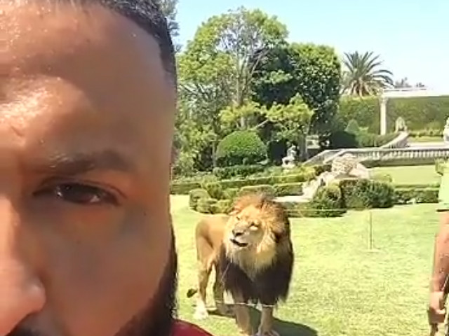 """DJ Khaled Poses With Lion For """"Major Key"""" Album, Claims To Have New Drake Vocals"""