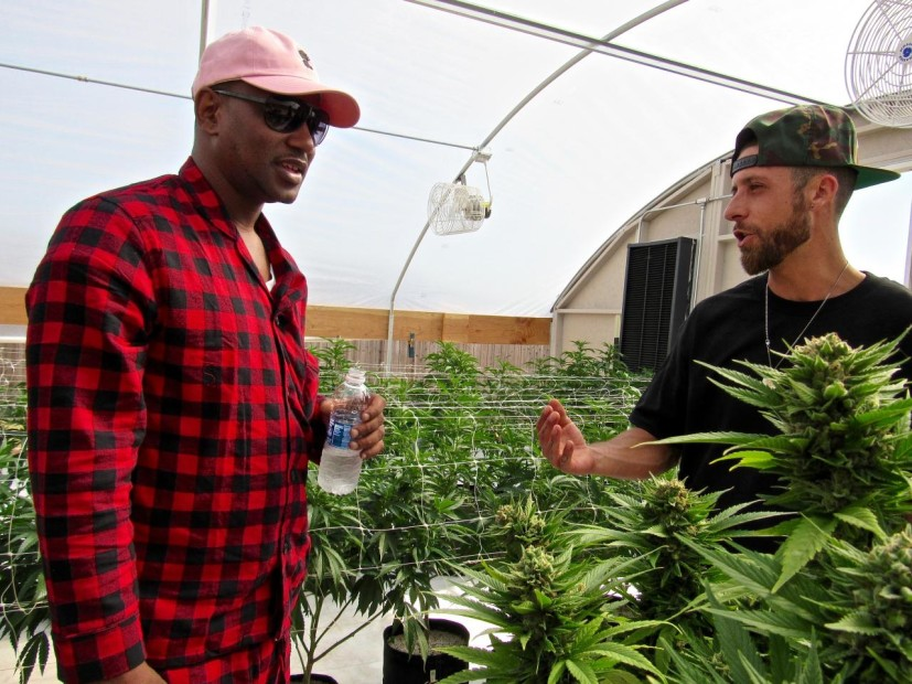 Cam'ron Gets His Own Weed Strain