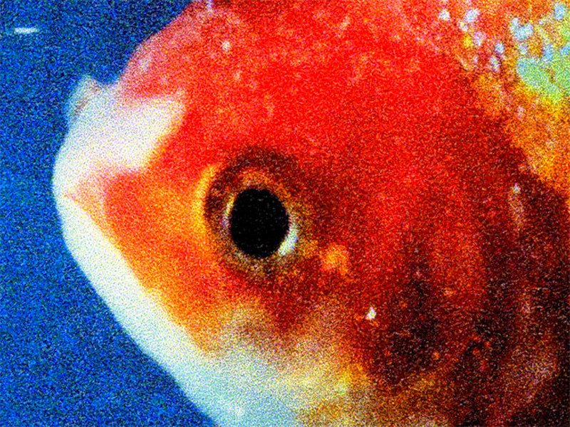 """Vince Staples Releases """"Big Fish Theory"""" Album"""